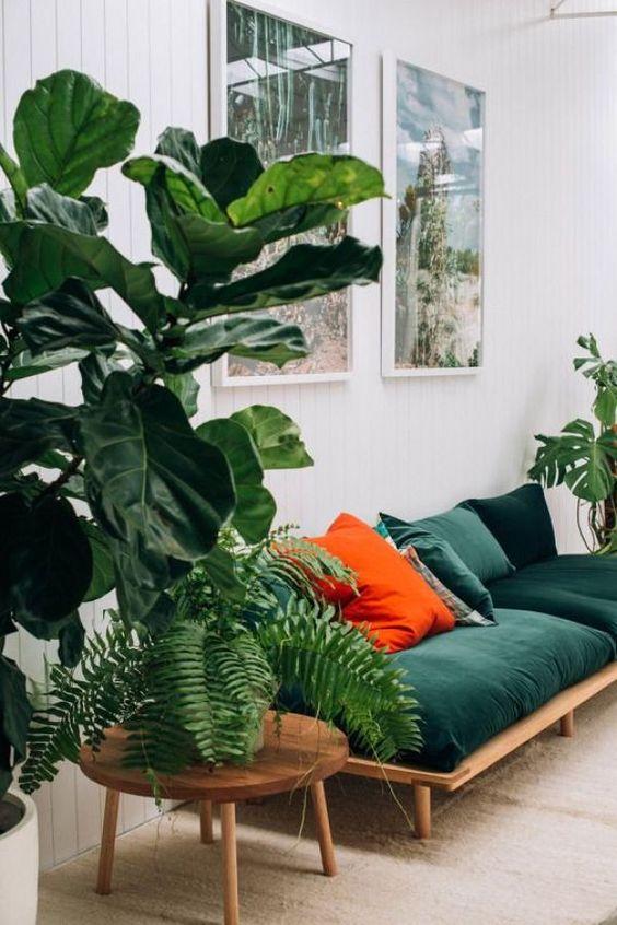 plantas y decoración